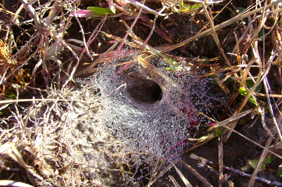 Dewed-Spider-Web-2